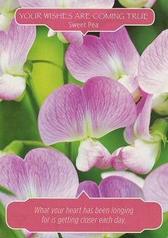 your-wishes-are-coming-true-sweet-pea